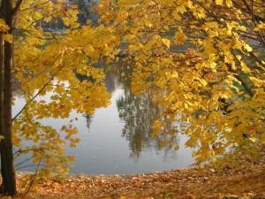 otoño_cubiertas para piscinas